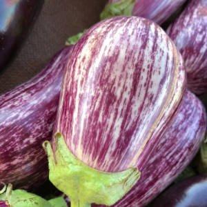 small purple and white eggplant