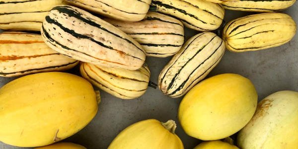 yellow and green lined squash